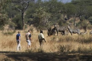 Additional Activities in Tarangire National Park